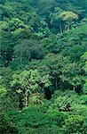 Ghana,Volta Region,Shairi. Rainforests hug the mountainous borders of Ghana and Togo. Stock Photo - Premium Rights-Managed, Artist: AWL Images, Code: 862-03711637
