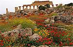 Italy,Sicily,Trapani. Selinunte is an abandoned ancient Greek city,with ruins of an acropolis and numerous temples. The city was founded in the seventh century BC,and effectively destroyed in 409 BC. Selinunte is located in the southwest coast of Sicily in the province of Trapani,close to the border with Agrigento province. Stock Photo - Premium Rights-Managed, Artist: AWL Images, Code: 862-03712375