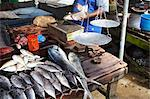 Fish for sale at market, Galle, Sri Lanka Stock Photo - Premium Rights-Managed, Artist: AWL Images, Code: 862-03713523