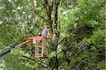 Man Trimming Tree Branches from Cherry Picker, Salzburg, Austria Stock Photo - Premium Rights-Managed, Artist: Bettina Salomon, Code: 700-03720133