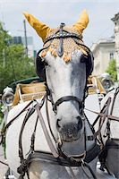 Close-Up of Horse Pulling Wagon Stock Photo - Premium Rights-Managednull, Code: 700-03720153
