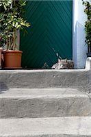 Cat sleeping on a step, Positano, Amalfi Coast Stock Photo - Premium Rights-Managednull, Code: 845-03720746