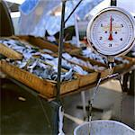 Weighing Scales on Fish Stall Stock Photo - Premium Rights-Managed, Artist: foodanddrinkphotos, Code: 824-03722558