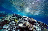 queensland - Healthy reef table with hard and soft corals Stock Photo - Premium Rights-Managednull, Code: 832-03724470