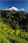 Annapurna South and Hiunchuli as seen from Ghandruk, Gandaki Zone, Nepal Stock Photo - Premium Rights-Managed, Artist: Jochen Schlenker, Code: 700-03734643
