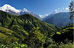 Annapurna South seen from Ghandruk Village, Annapurna Conservation Area, Gandaki Zone, Nepal Stock Photo - Premium Rights-Managed, Artist: Jochen Schlenker, Code: 700-03734649