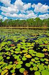 Australia, Northern Territory, Kakadu National Park.  Lily pads in Annaburroo Billabong.(PR) Stock Photo - Premium Rights-Managed, Artist: AWL Images, Code: 862-03736317
