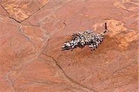 A Samburu girl herds her family s goats near a waterhole dug in a seasonal river bed. Stock Photo - Premium Rights-Managednull, Code: 862-03736835