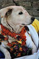 Portrait of Dog, Pashupatinath Temple, Kathmandu, Bagmati, Madhyamanchal, Nepal Stock Photo - Premium Royalty-Freenull, Code: 600-03737758