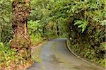Rainforest in Queimadas, Madeira, Portugal Stock Photo - Premium Rights-Managed, Artist: Jochen Schlenker, Code: 700-03737933