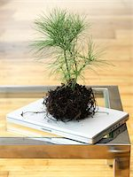 forestry - Sapling on Laptop Computer Stock Photo - Premium Royalty-Freenull, Code: 600-03738404