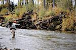 Woman flyfishing and casts for wild steelhead on Deep Creek, Kenai Peninsula, Southcentral Alaska, Autumn