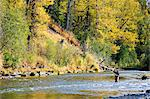 Flyfisherman casts for wild Steelhead on Deep Creek, Kenai Peninsula, Southcentral Alaska, Autumn Stock Photo - Premium Rights-Managed, Artist: AlaskaStock, Code: 854-03739513