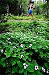 Female jogger runs past Dwarf Dogwood on the Far North Bicentennial Park Trail in Anchorage, Southcentral Alaska, Summer Stock Photo - Premium Rights-Managed, Artist: AlaskaStock, Code: 854-03739619