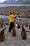 Woman photographs at a  King penguin rookery, St. Andrew's Bay, Island of South Georgia, Antarctica, Summer Stock Photo - Premium Rights-Managed, Artist: AlaskaStock, Code: 854-03739830