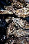 Oyster shellfish Stock Photo - Premium Rights-Managed, Artist: foodanddrinkphotos, Code: 824-03744658