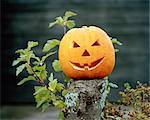 A Halloween pumpkin. Stock Photo - Premium Royalty-Free, Artist: Sheltered Images, Code: 6102-03750427