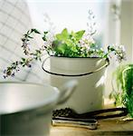 A bouquet of herbs in an enameled bucket. Stock Photo - Premium Royalty-Free, Artist: Narratives, Code: 6102-03750822