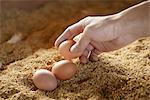 Organic eggs Stock Photo - Premium Royalty-Free, Artist: foodanddrinkphotos, Code: 669-03754913