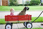 Little red wagon Stock Photo - Premium Royalty-Free, Artist: Aurora Photos, Code: 618-03757125