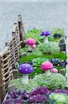 Aanita Muscaria and Flowering Kale, Salzburg, Austria Stock Photo - Premium Royalty-Free, Artist: Bettina Salomon, Code: 600-03762606