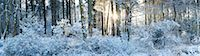 panoramic winter scene - Woodland at Sunrise after Snow Fall, Dorset, England Stock Photo - Premium Rights-Managednull, Code: 700-03768721