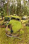 Car Graveyard, Valdes Island, British Columbia, Canada