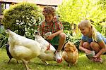 Boy and Girl Feeding Chickens in Garden