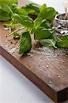 Basil Leaves and Rock Salt on Wooden Cutting Board Stock Photo - Premium Rights-Managed, Artist: ableimages, Code: 822-03780888