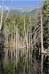 Flooded Trees, Coast Mountains, British Columbia, Canada