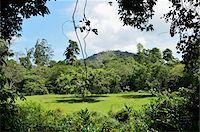 southeast asian - Rainforest, Taman Negara National Park, Pahang, Malaysia Stock Photo - Premium Rights-Managednull, Code: 700-03799548