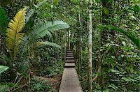 southeast asian - Boardwalk Through Rainforest, Taman Negara National Park, Pahang, Malaysia Stock Photo - Premium Rights-Managednull, Code: 700-03799559