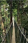 Canopy Walk, Taman Negara National Park, Pahang, Malaysia