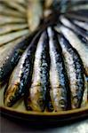 Rosette of sardines in oil Stock Photo - Premium Royalty-Free, Artist: Photocuisine, Code: 652-03802910