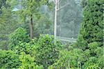 Canopy Walkway, Sepilok Rainforest Discovery Center, Sabah, Borneo, Malaysia Stock Photo - Premium Rights-Managed, Artist: Jochen Schlenker, Code: 700-03805288