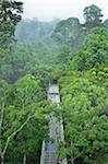 Canopy Walkway, Sepilok Rainforest Discovery Center, Sabah, Borneo, Malaysia Stock Photo - Premium Rights-Managed, Artist: Jochen Schlenker, Code: 700-03805291