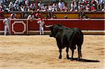 Bull in Bullring, Fiesta de San Fermin, Pamplona, Navarre, Spain Stock Photo - Premium Rights-Managed, Artist: Emanuele Ciccomartino, Code: 700-03805436