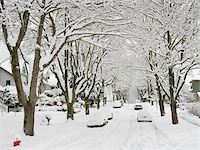 Fresh Snowfall, Dunbar-Southlands Neighbourhood, Vancouver, British Columbia, Canada Stock Photo - Premium Rights-Managednull, Code: 700-03805569