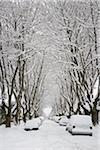 Fresh Snowfall, Dunbar-Southlands Neighbourhood, Vancouver, British Columbia, Canada Stock Photo - Premium Rights-Managed, Artist: J. A. Kraulis, Code: 700-03805572