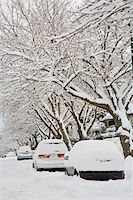 Fresh Snowfall, Dunbar-Southlands Neighbourhood, Vancouver, British Columbia, Canada Stock Photo - Premium Rights-Managednull, Code: 700-03805574