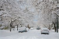 Fresh Snowfall, Dunbar-Southlands Neighbourhood, Vancouver, British Columbia, Canada Stock Photo - Premium Rights-Managednull, Code: 700-03805576