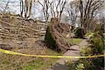 Windstorm Aftermath, Vancouver, British Columbia, Canada Stock Photo - Premium Rights-Managed, Artist: J. A. Kraulis, Code: 700-03805729