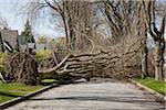 Fallen Tree Blocking Street, Vancouver, British Columbia, Canada Stock Photo - Premium Rights-Managed, Artist: J. A. Kraulis, Code: 700-03805731