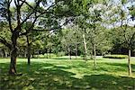 Trees in Park Stock Photo - Premium Rights-Managed, Artist: Aflo Relax, Code: 859-03805837