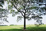 Tree in Park Stock Photo - Premium Rights-Managed, Artist: Aflo Relax, Code: 859-03805838
