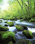 Oirase Stream, Aomori, Japan Stock Photo - Premium Rights-Managed, Artist: Aflo Relax, Code: 859-03806857