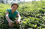 India, South India, Kerala. A young girl tries tea picking during a family holiday in Munnar region. Stock Photo - Premium Rights-Managed, Artist: AWL Images, Code: 862-03807492