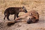 Kenya, Masai Mara.  A mother spotted hyena and her pup, on the plains of the Masai Mara. Stock Photo - Premium Rights-Managed, Artist: AWL Images, Code: 862-03807773
