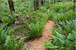 Path Through Ferns, Kitty Coleman Woodland Gardens, Courtenay, British Columbia, Canada Stock Photo - Premium Rights-Managed, Artist: J. A. Kraulis, Code: 700-03814656
