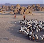 Lake Abbe, on the border of Djibouti and Ethiopia, is the last in a line of alkaline lakes in which the Awash River dissipates. Livestock belonging to the nomadic Afar people graze this harsh, windswept region. Stock Photo - Premium Rights-Managed, Artist: AWL Images, Code: 862-03820290